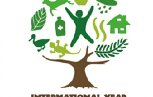 International Year of Forests Art & Design Competition
