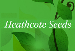 Heathcote Seeds